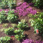 bepflanzung_2