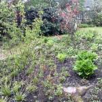 Hier sehen Sie Bilder von unseren Bepflanzungen